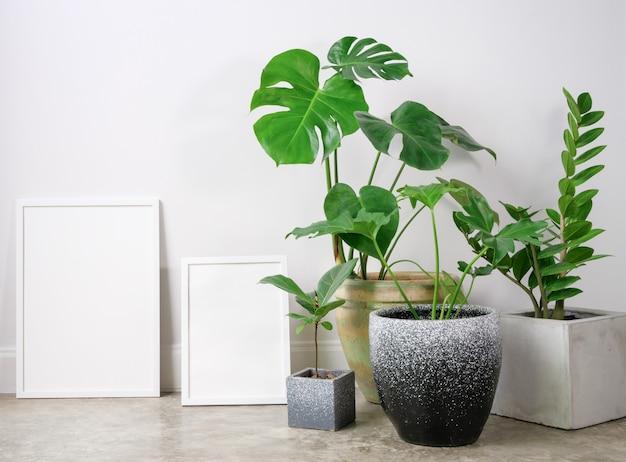 방의 아름다운 콘크리트 냄비에 두 가지 크기의 포스터 프레임과 monstera philodendron 및 고무 식물 식물 열대 집 식물을 모의합니다.