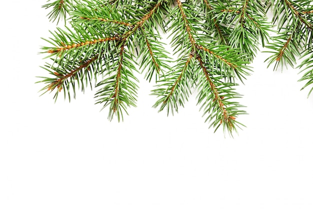 Mockup christmas tree branches border over white isolated