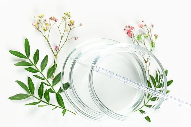 有機化粧品または代替医療のモックアップ。緑の葉とピペットのペトリ皿