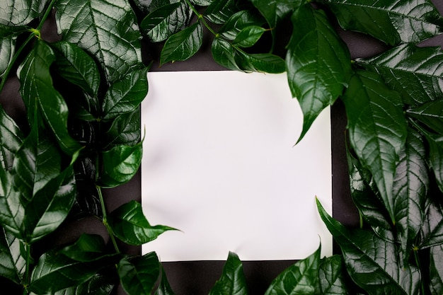 측면에 녹색 잎이있는 어두운 배경에 흰색 빈 카드의 모형, 평면 평신도, 텍스트 공간, 평면도