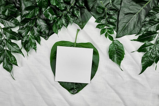 측면, 평면 위치, 텍스트, 평면도, 제품 배너, 자연 개념에 대 한 공간에 녹색 잎 섬유 배경에 흰색 빈 카드의 모형.