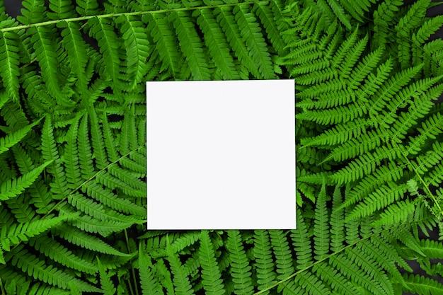 美しいシダの葉と空の紙のモックアップ