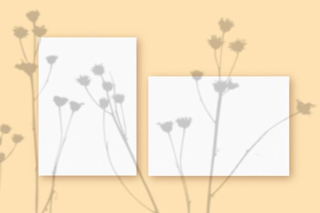 ベージュのテーブルの背景にテクスチャの白い紙の水平方向と垂直方向のシートに重ねられた植物の影のモックアップ。