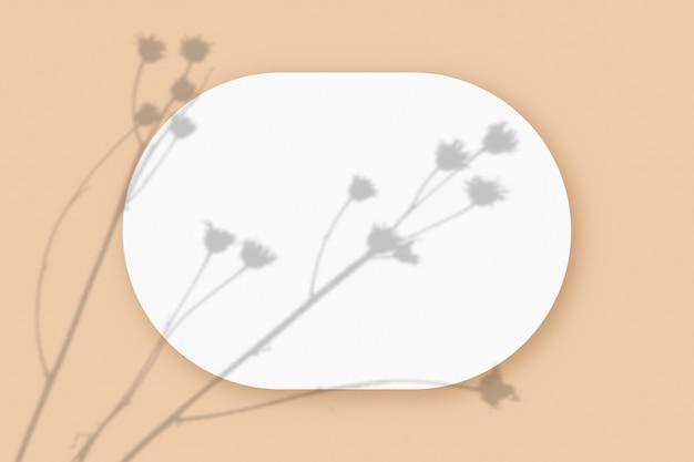 ベージュのテーブルの背景にテクスチャの白い紙の楕円形のシートに重ねられた植物の影のモックアップ。水平方向。