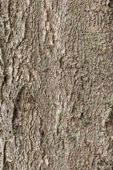 Mockup wooden texture tree of dark rough tree bark brown color