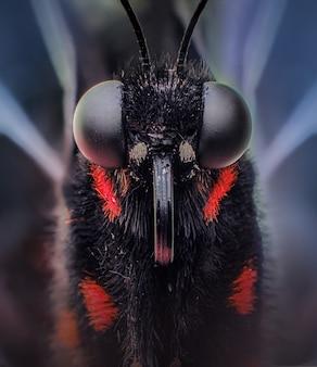 Macro di una farfalla nera