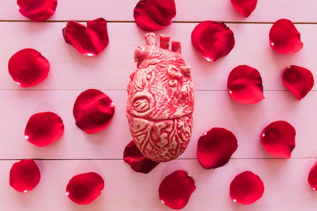 Model of heart and set of red flower petals