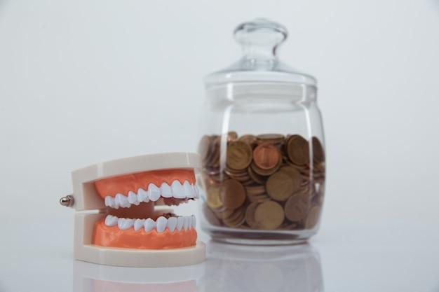 コインのクローズアップと顎とガラスの銀行のモデル。高価な歯科医のサービスコンセプト
