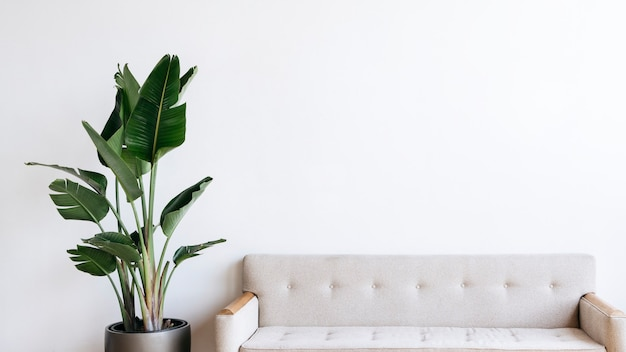 거실에 있는 현대적인 베이지색 패브릭 소파와 식물