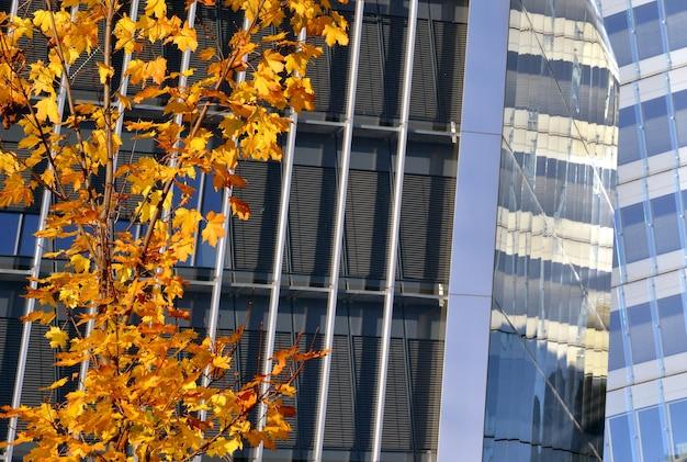 Modern building architecture details autum color