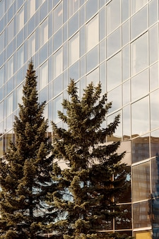 나무 앞에 현대적인 비즈니스 건물입니다. 유리 외관, 반사 및 일부 나무. 당신의 창의력을 위한 빈 공간. 유리창이 있는 현대적인 비즈니스 건물의 낮은 시야각