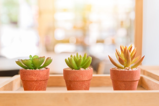 Modern cafe nature small plant in pot or home decoration