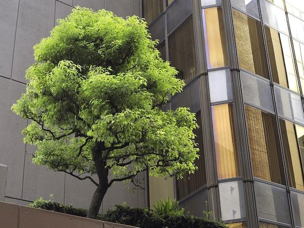 유리 과부와 콘크리트 벽 사이에 신선한 녹색 나무가있는 현대적인 도시 테라스