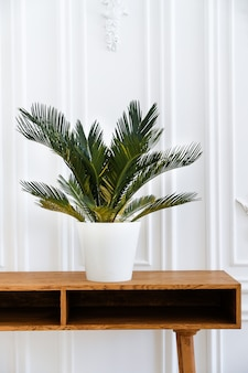 Modern clean interior in scandinavian style with a flower pot and a houseplant.