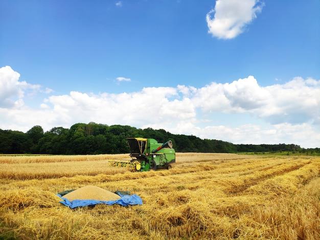 小麦畑、収穫、農地に取り組んでいる近代的なコンバイン。小麦の最初のバッチはタープの上にあります。