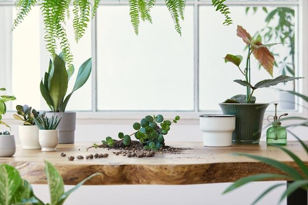가정 정원의 현대적인 구성은 다른 디자인 냄비에 아름다운 식물, 선인장, 다육 식물, 공기 식물을 많이 채웠습니다. 세련된 식물학 인테리어. . 홈 원예 개념 ..