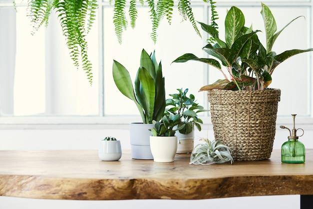 가정 정원의 현대적인 구성은 다른 디자인 냄비에 아름다운 식물, 선인장, 다육 식물, 공기 식물을 많이 채웠습니다.