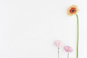 Modern composition with three flowers