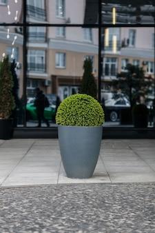 街の通りに植物が植えられたモダンな植木鉢。造園