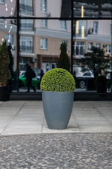 Modern flowerpot with plants on the street of the city. landscaping