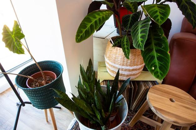 モダンな緑の家の植物のリビングルームのレトロなデザインのさまざまな植物の上面図