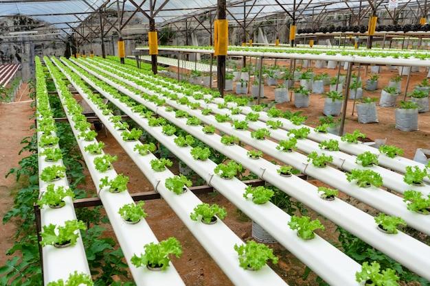 관개 시스템으로 샐러드를 재배하기 위한 현대적인 온실. 성장하는 식물의 산업 규모.