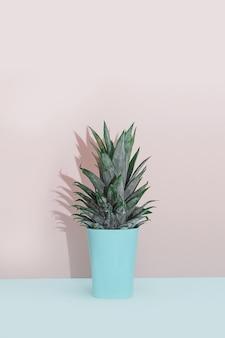 現代の家庭装飾熱帯植物。サボテン、ピンク、青、背景。ミニマルフラットレイ。