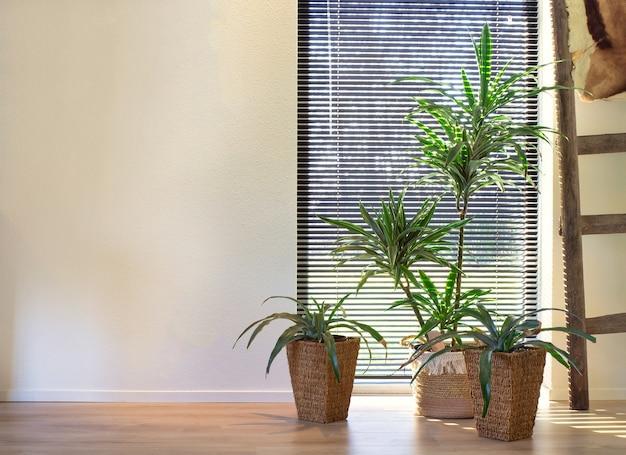 사랑스러운 집의 창 근처 짠 바구니 복고풍 인테리어에 현대적인 실내 녹색 식물, 다양한 가정 식물이있는 세련된 객실 인테리어