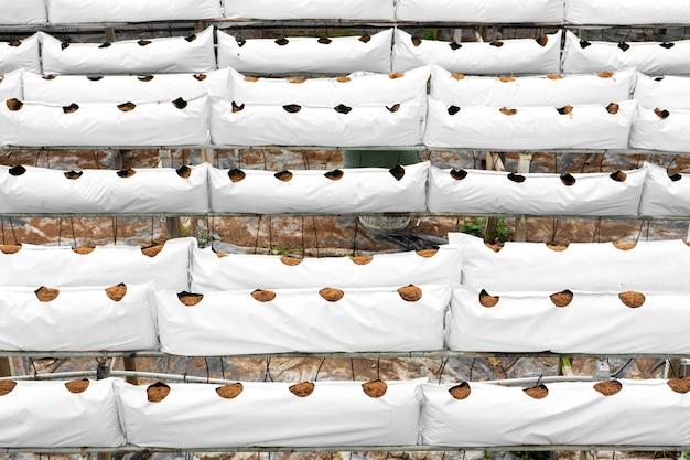 現代の産業用植物栽培農場。自動灌漑を備えた温室。植え付けの準備。