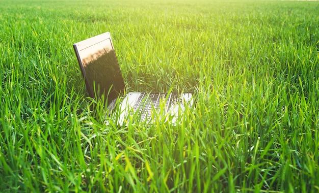 A modern laptop lies on the fresh green grass under the sunlight