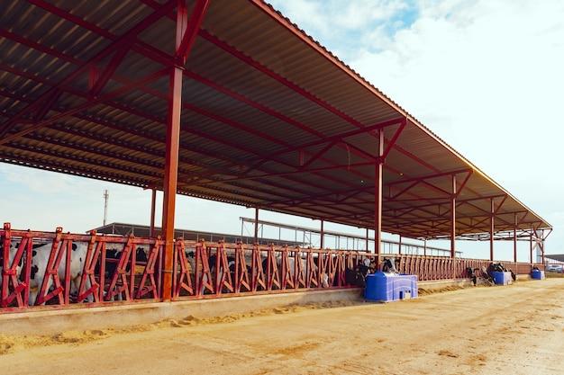 牛の群れを持つ現代の屋外牛舎農場