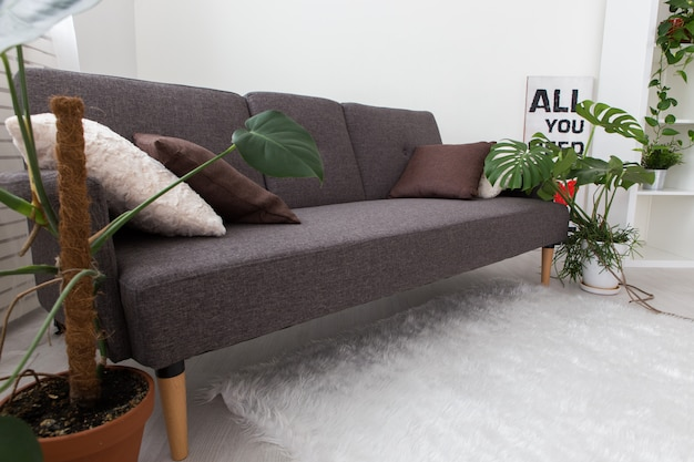 Modern studio apartment with living plants. gray in the interior. sofa in the living room.