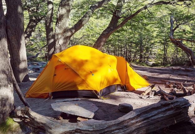 Современная туристическая палатка, висящая между деревьями в зеленом лесу