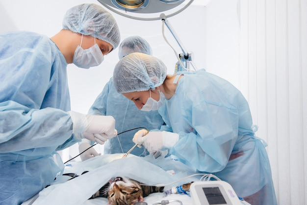 In a modern veterinary clinic, an operation is performed on an animal on the operating table in close-up. veterinary clinic