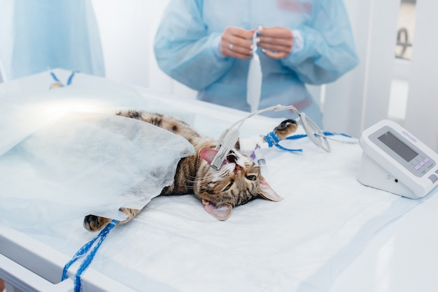 In a modern veterinary clinic, an operation is performed on an animal on the operating table in close-up. veterinary clinic.
