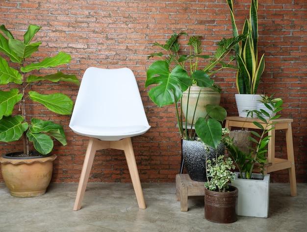 Современный белый стул в гостиной, красная кирпичная стена, домашнее растение, зеленые листья, очищает воздух с помощью monsteraphilodendron xanadu zamioculcas zamifolias, змеиного растения.