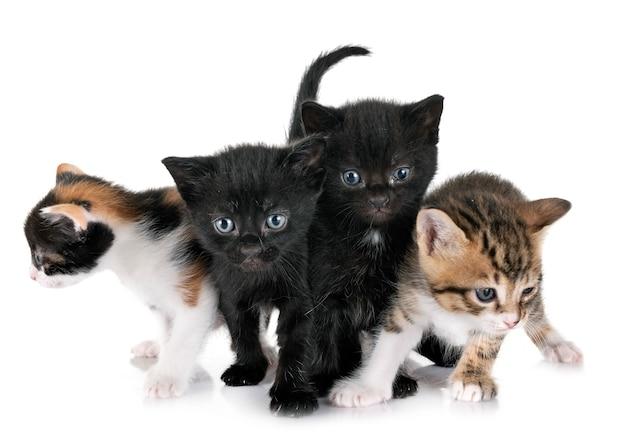Moggy kitten