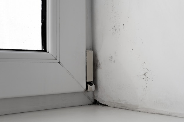 Mold in the corner of the window on a white wall texture background