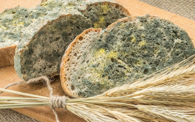 Mold growing rapidly on moldy bread in green and white spores.