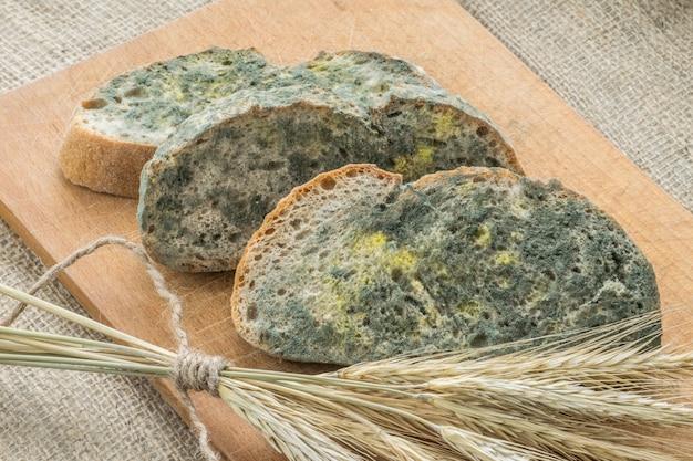 Плесень быстро растет на заплесневелом хлебе в зеленых и белых спорах.