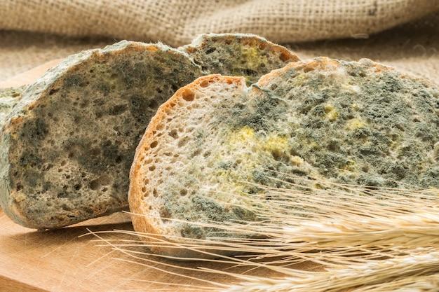 Плесень быстро растет на заплесневелом хлебе в зеленых и белых спорах