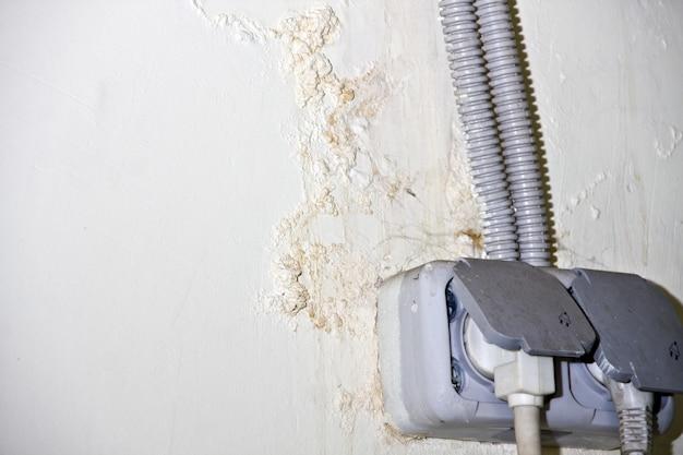 壁にカビが生える