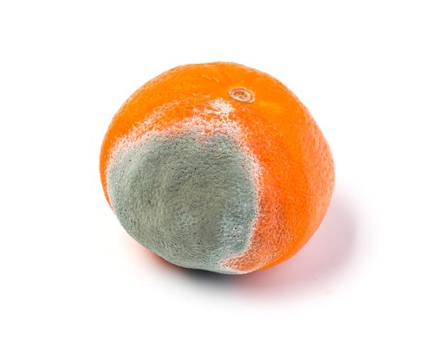 Moldy mandarine on a white background