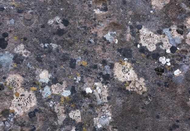 Заплесневелый камень текстуры