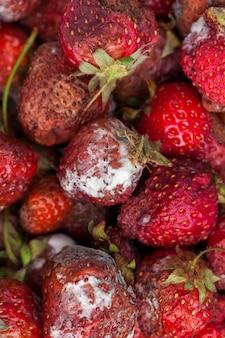 곰팡이가 핀 썩은 빨간 딸기를 닫습니다.