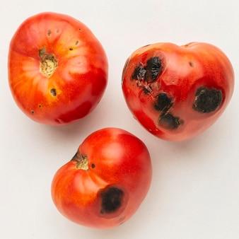 Pomodori ammuffiti avanzi di rifiuti alimentari