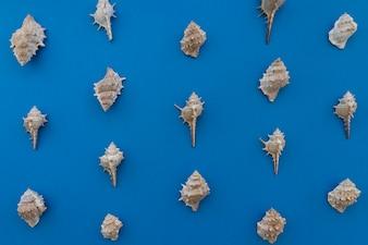 Mollusks on blue background