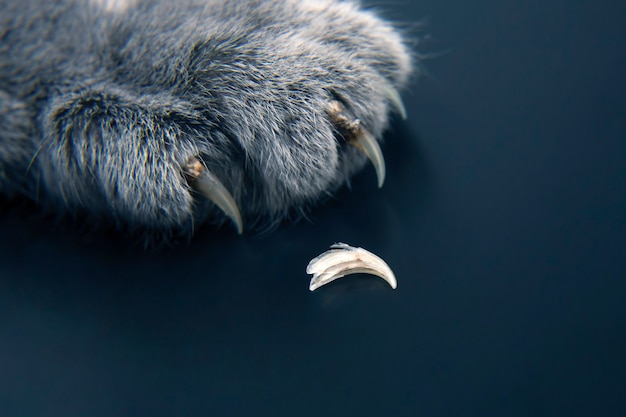 Molting and replacing the claws of the cat paws
