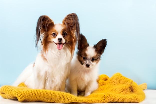 彼女の子犬とママ