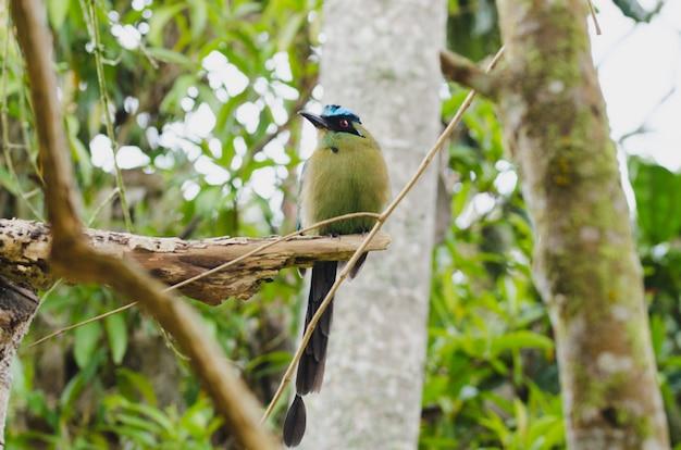 木にとまるモモタスモモタ鳥。